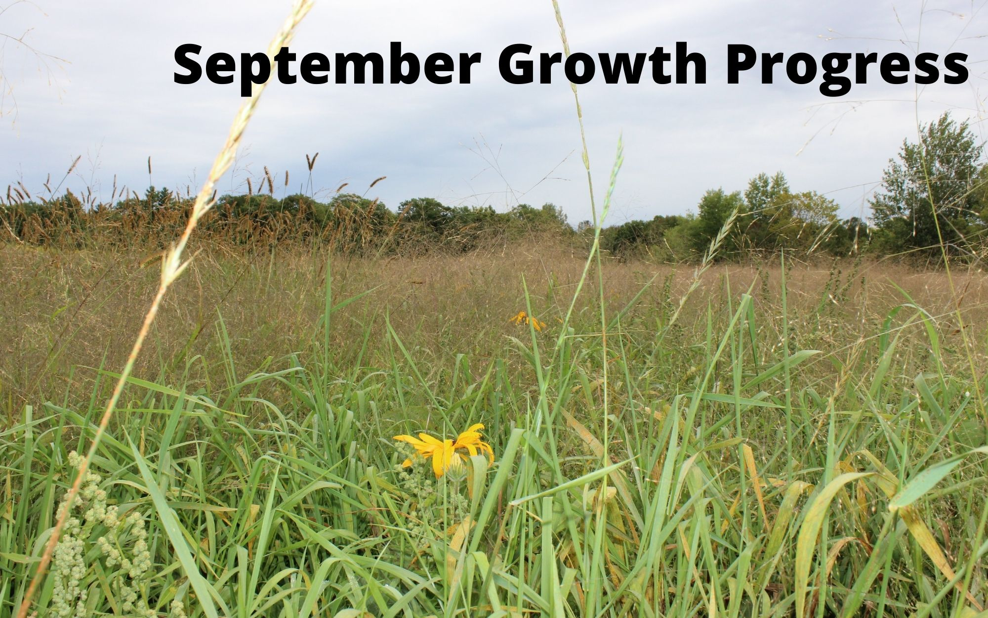 September Growth